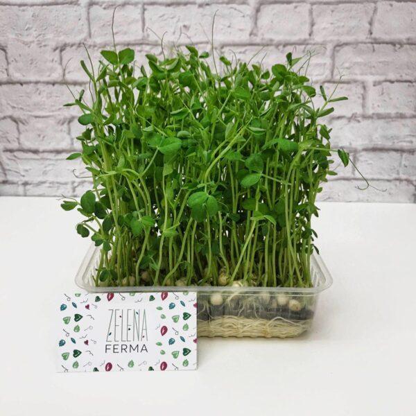 микрозелень гороха выращенная
