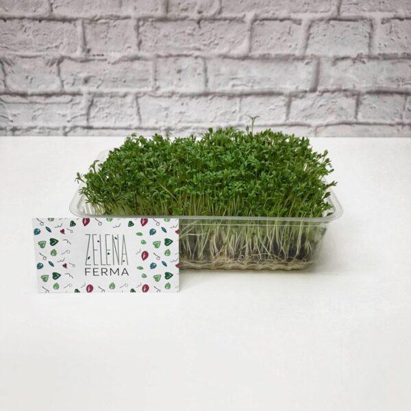 микрозелень кресс-салата выращенная
