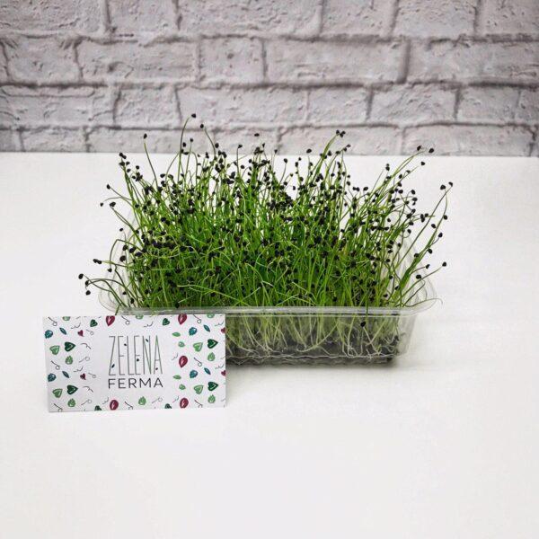 микрозелень лука выращенная