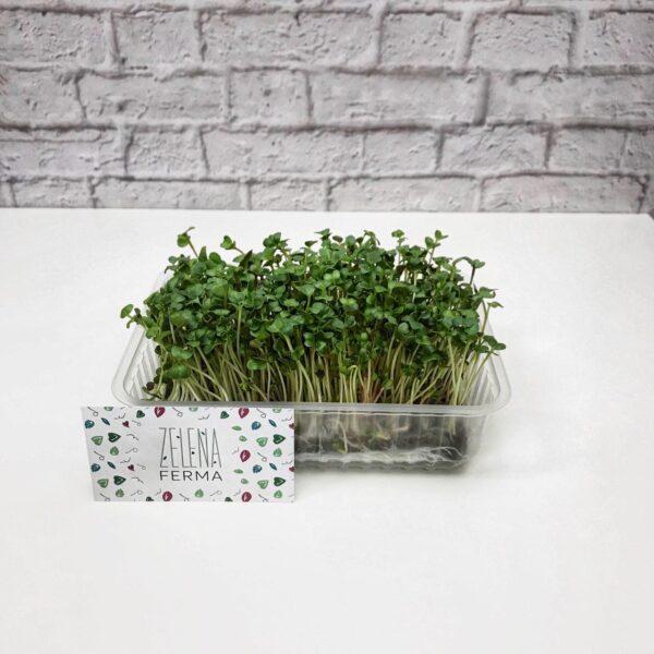 микрозелень редиса выращенная