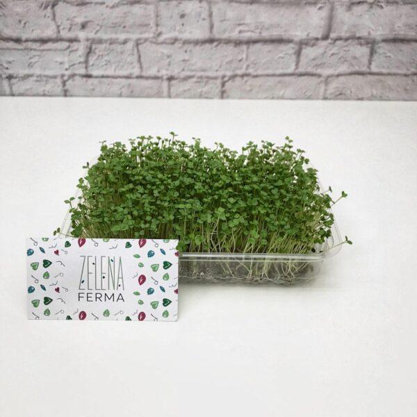 микрозелень рукколы выращенная